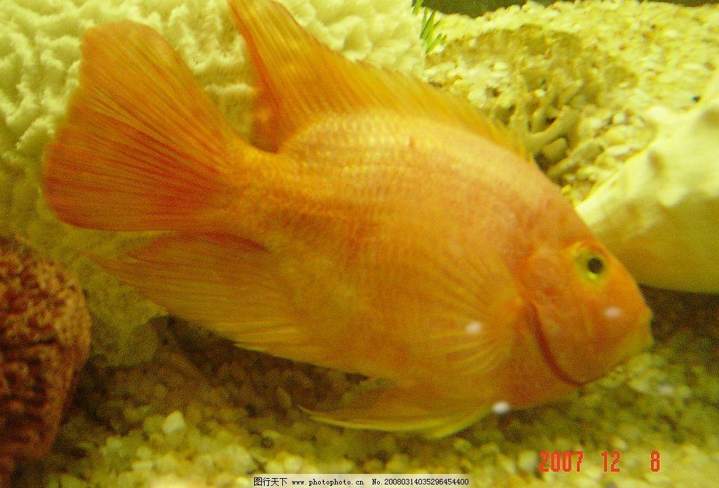 发财鱼 生物世界 鱼类 动动风景 摄影图库