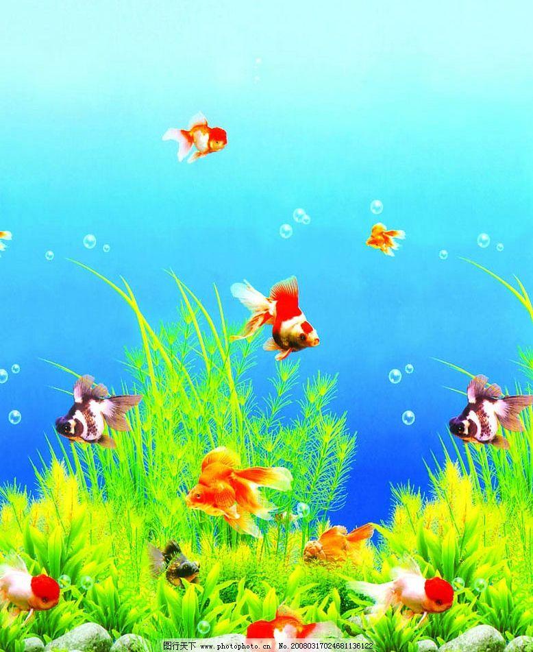海底世界 鱼 海草