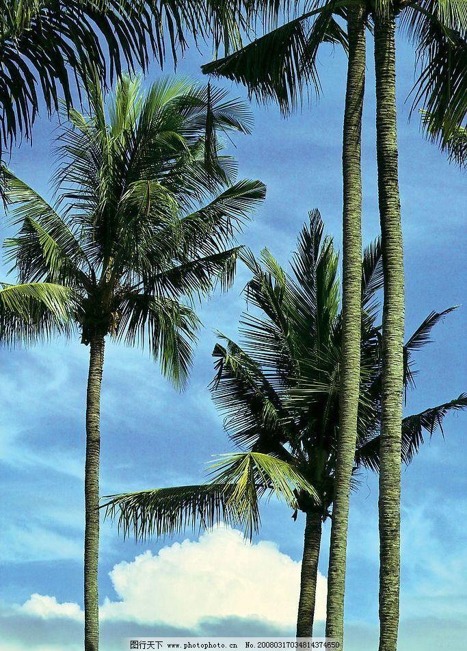 椰子樹 綠樹 自然景觀 自然風景 攝影圖庫