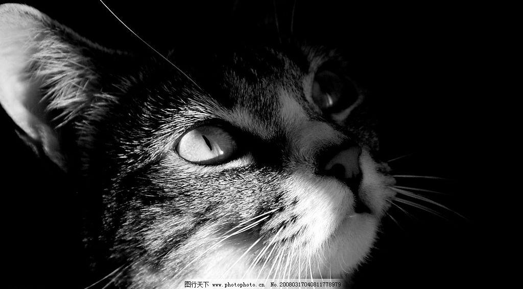 黑白猫咪照图片