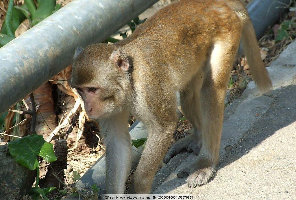 猴子 狮子山 冬天 街道 树木 旅游摄影 自然风景 风景相 摄影图库 72