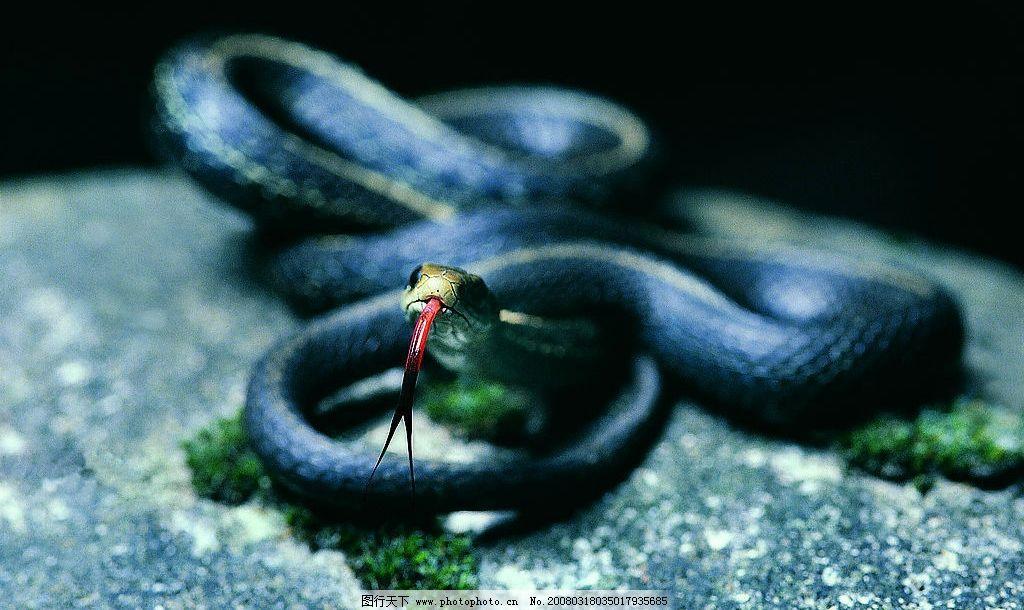 蛇青春修炼手册的谱子