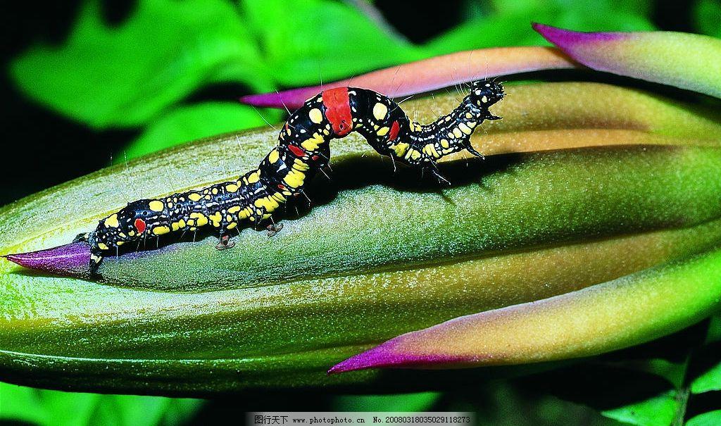 爬行的毛毛虫 动物 昆虫 毛毛虫 摄影 生物世界 野生动物 动物天地