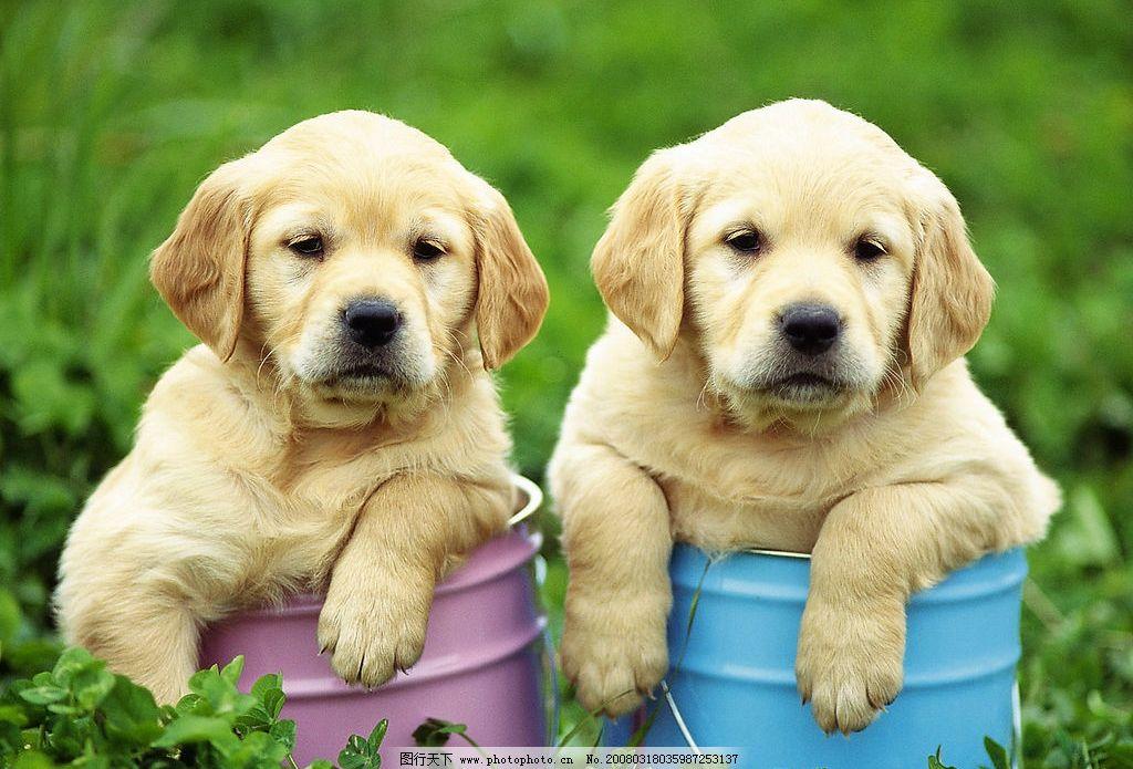 可爱小狗 可爱 小狗 高精
