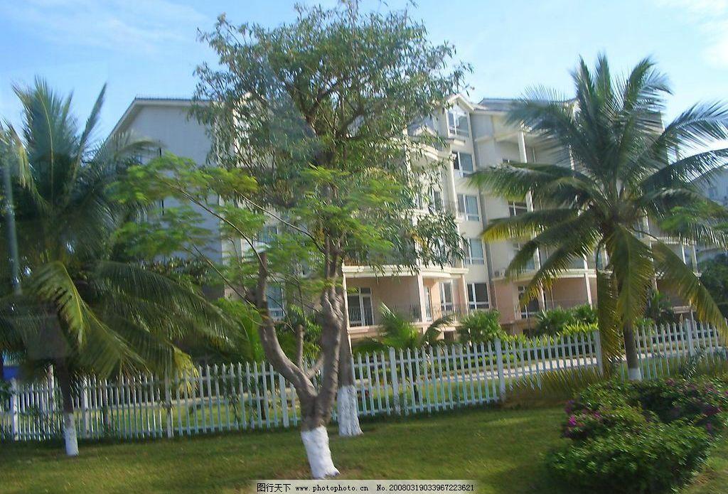 三亚 树木 自然 椰子树 旅游摄影 国内旅游 三亚之行 摄影图库 72 jpg