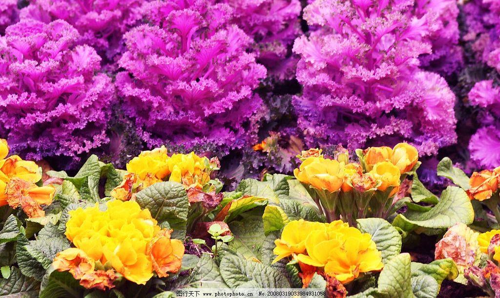 公园花卉 红色花卉 鲜艳 盆花 公园 旅游摄影 国内旅游 旅游风景 摄影