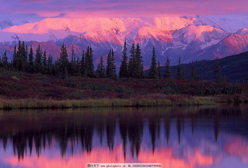 紫霞雪山 紫霞 雪山 杉树 自然景观 山水风景 世界风光壁纸 摄影图库
