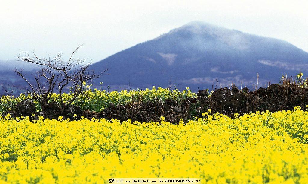 一年四季 春天1 自然景观 自然风景 摄影图库 350 jpg