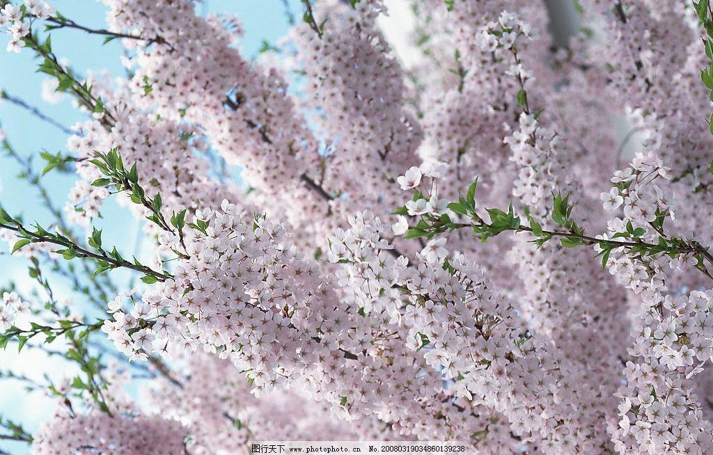 梅花 梅花,花镜,春色,花 自然景观 自然风景 百花齐放 摄影图库 350