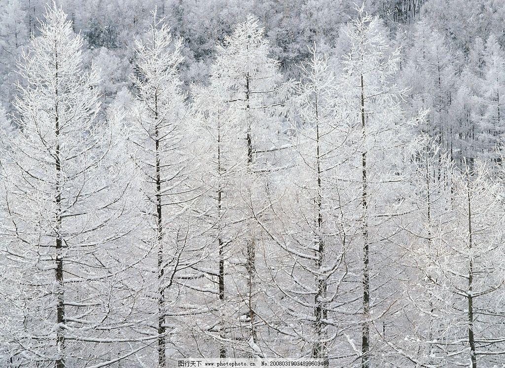 大雪森林 雪森林 自然景观 自然风景 摄影图库 350 jpg