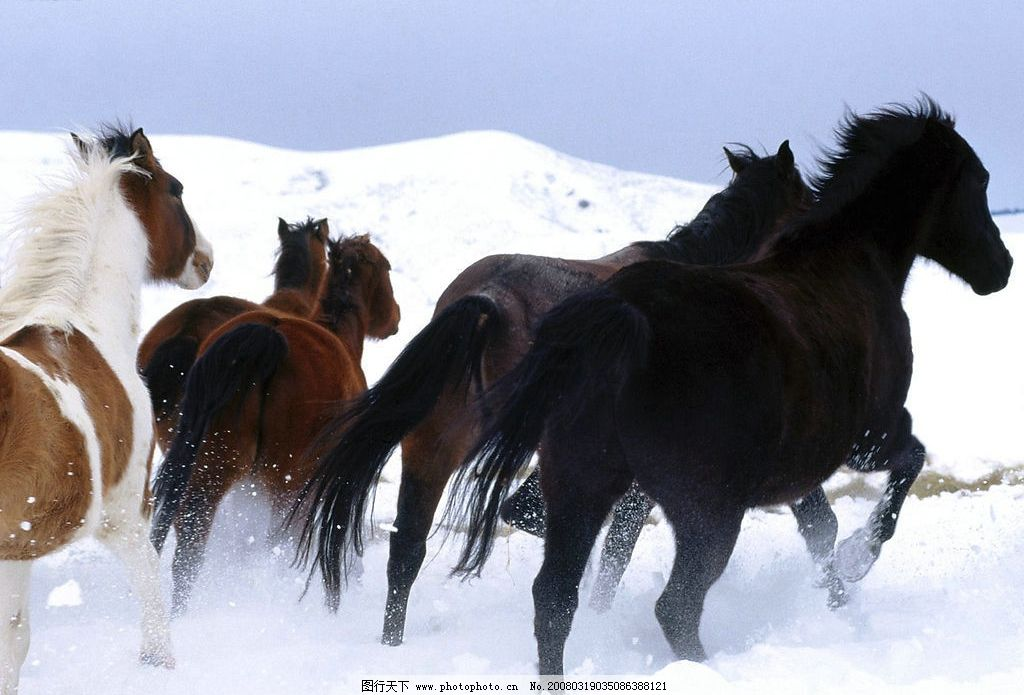 草原 生物世界 野生动物 高清图片 摄影图库 100 jpg    上传: 2008-3