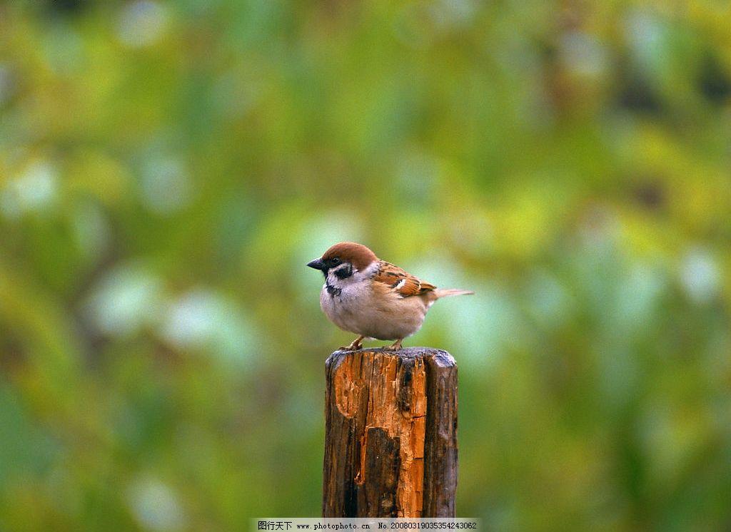 鸟素材 鸟类素材 鸟 素材 自然 清晰 鸟类 生物世界 动物素材 摄影