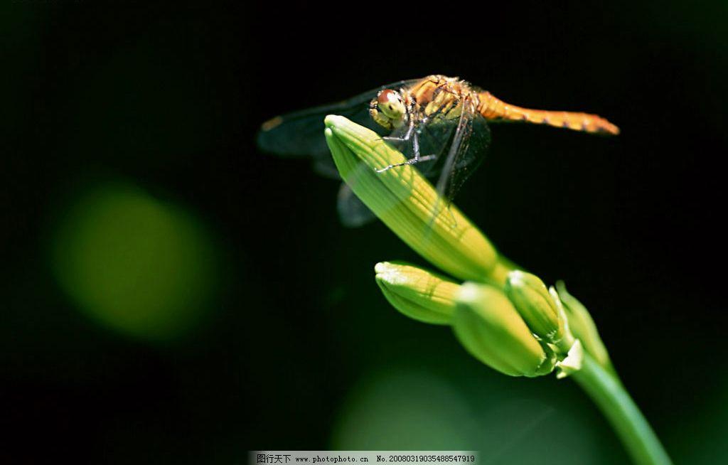植物与蜻蜓 植物与蜻蜓蜻蜓昆虫自然生物叶子空气土壤生长阳光水分
