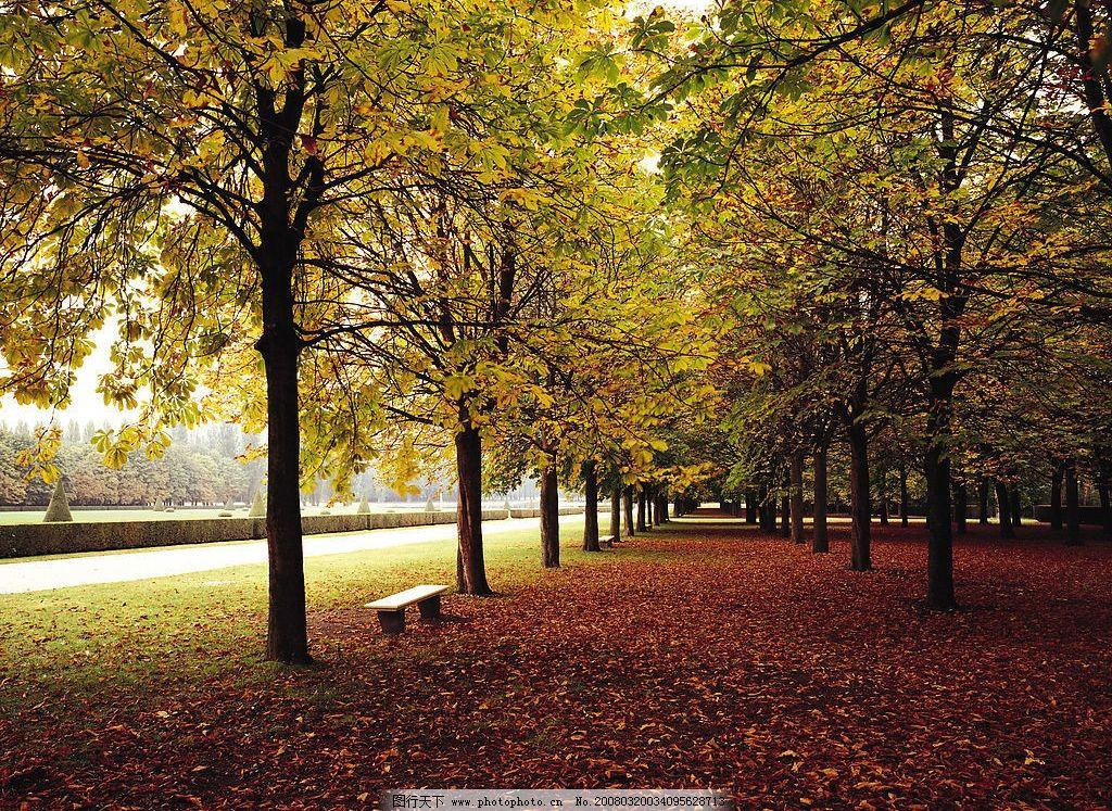 加拿大树荫下 加拿大风景 排列整齐 草地 落地树叶 石凳 旅游摄影