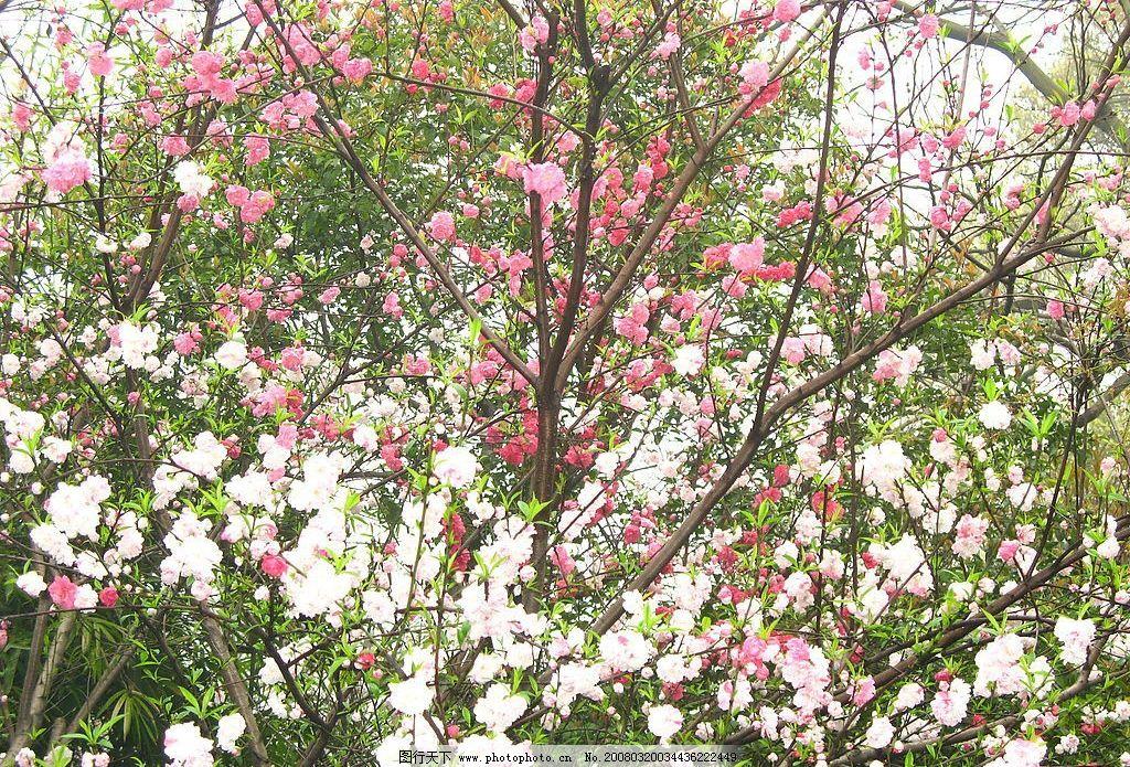 桃花 西湖 自然景观 山水风景 旅游拍拍 摄影图库 180 jpg