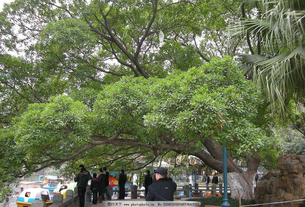 大树 人,树,水,假日,春游 自然景观 自然风景 植物 摄影图库 300 jpg