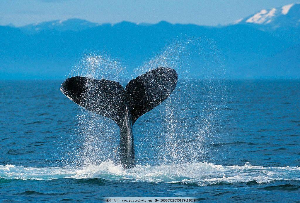 壁纸 动物 海洋动物 桌面 1024_695