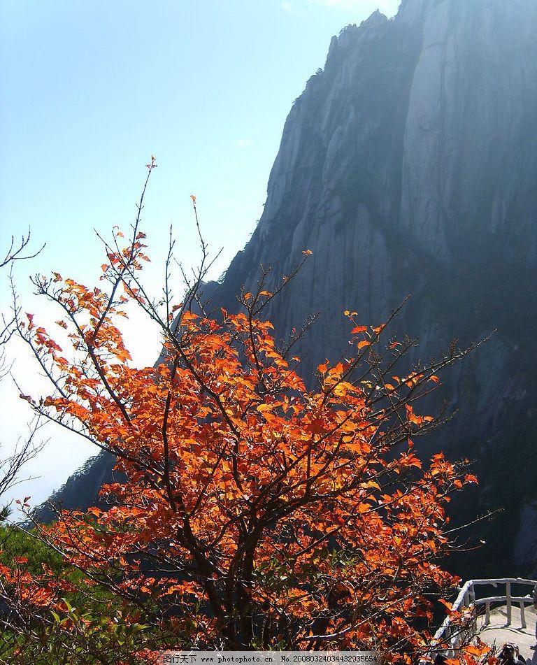 山水风景 山 岩石 秋天 中国名山 名山大川 黄山 红叶 摄影图库 自拍