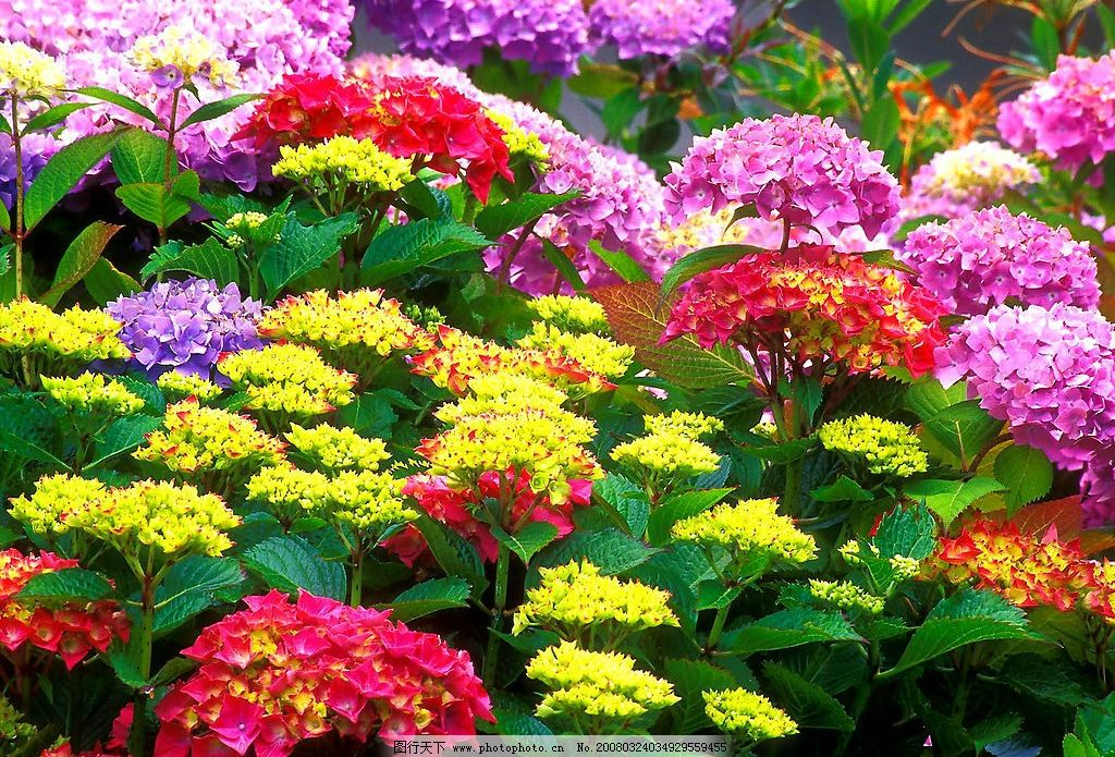 花的世界 花 菊花 绿色 康乃馨 自然景观 其他 花花世界 摄影图库 72