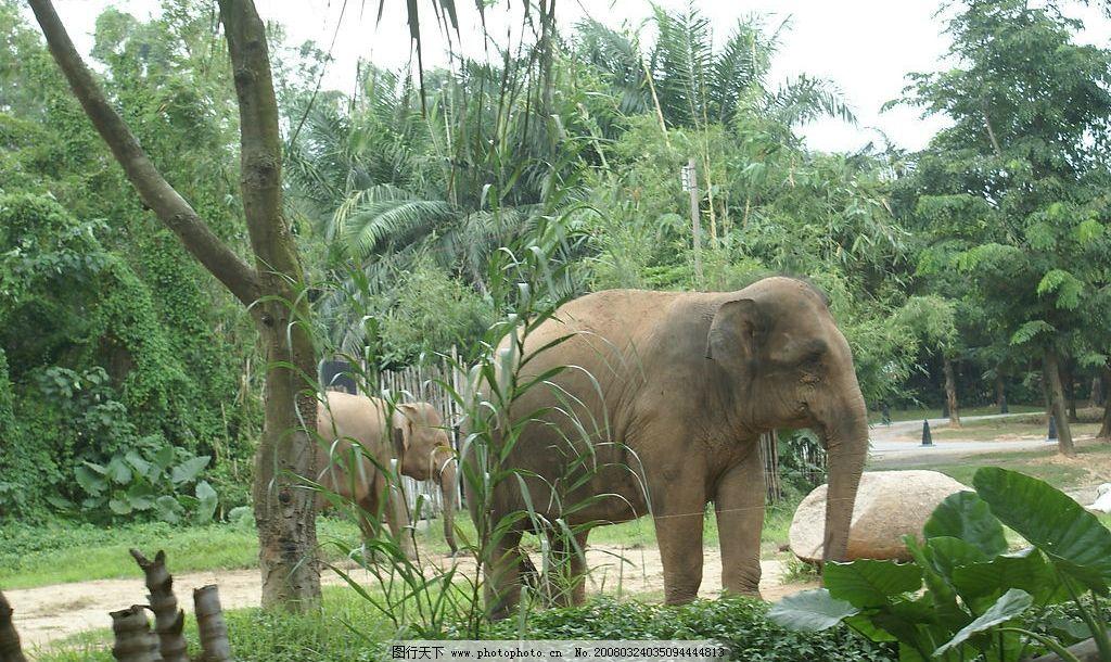 动物园的象图片