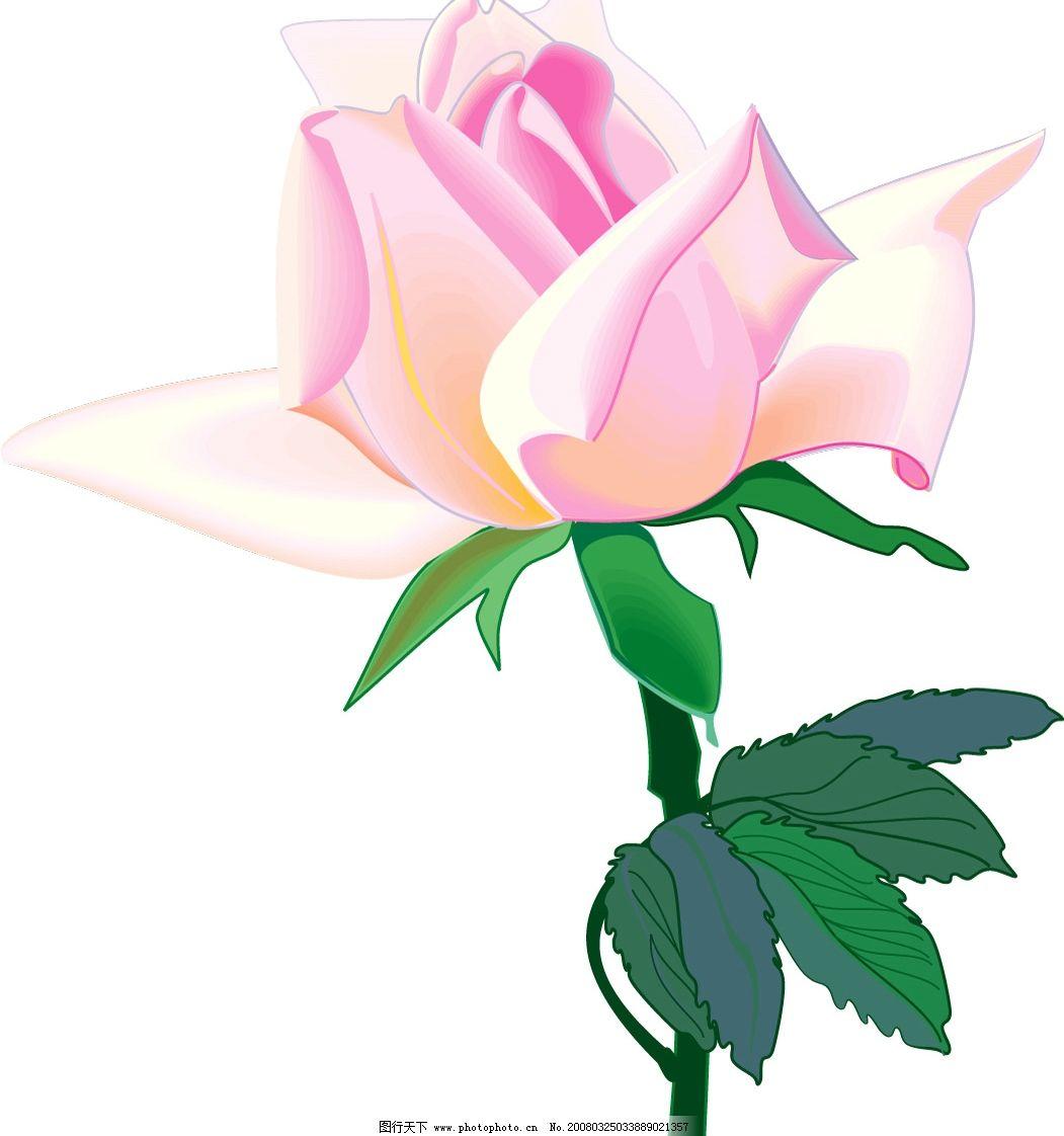 花朵3 一朵白色的玫瑰 其他矢量 矢量素材 各种鲜花 矢量图库