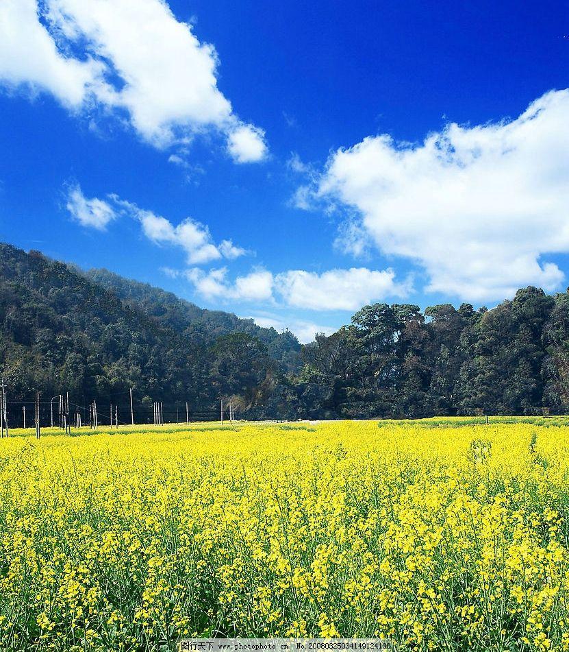 油菜花 旅游摄影 自然风景 摄影图库 72 jpg