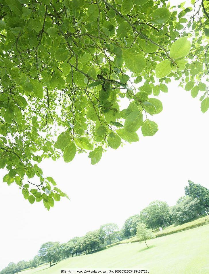 草原 草地 树木 树叶 树林 蓝天 白云 春天 旅游摄影 自然风景 摄影图