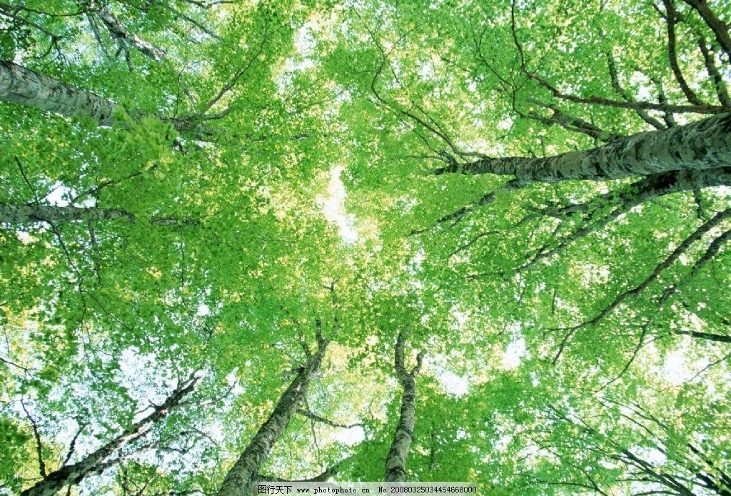 仰視大樹 仰視 自然景觀 山水風景 攝影圖庫 72 jpg