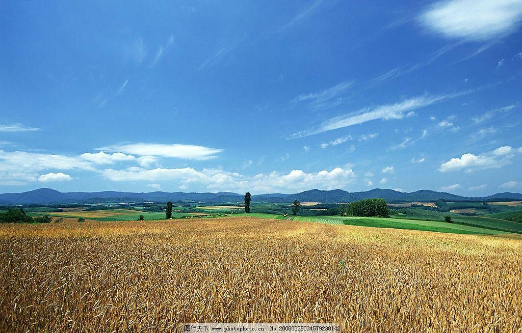 自然风光 蓝天白云绿地 自然景观 田园风光 风景 摄影图库 350 jpg