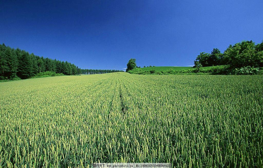 自然风光图片,蓝天白云绿地 风景 摄影图库-图行天下
