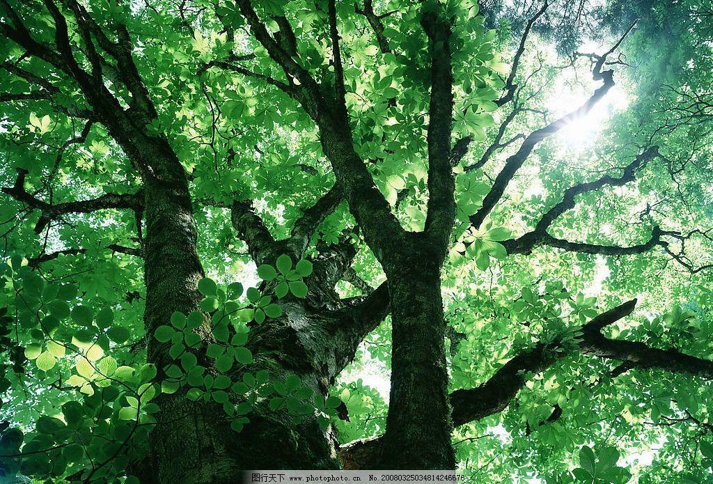 绿树图片_自然风景_自然景观_图行天下图库