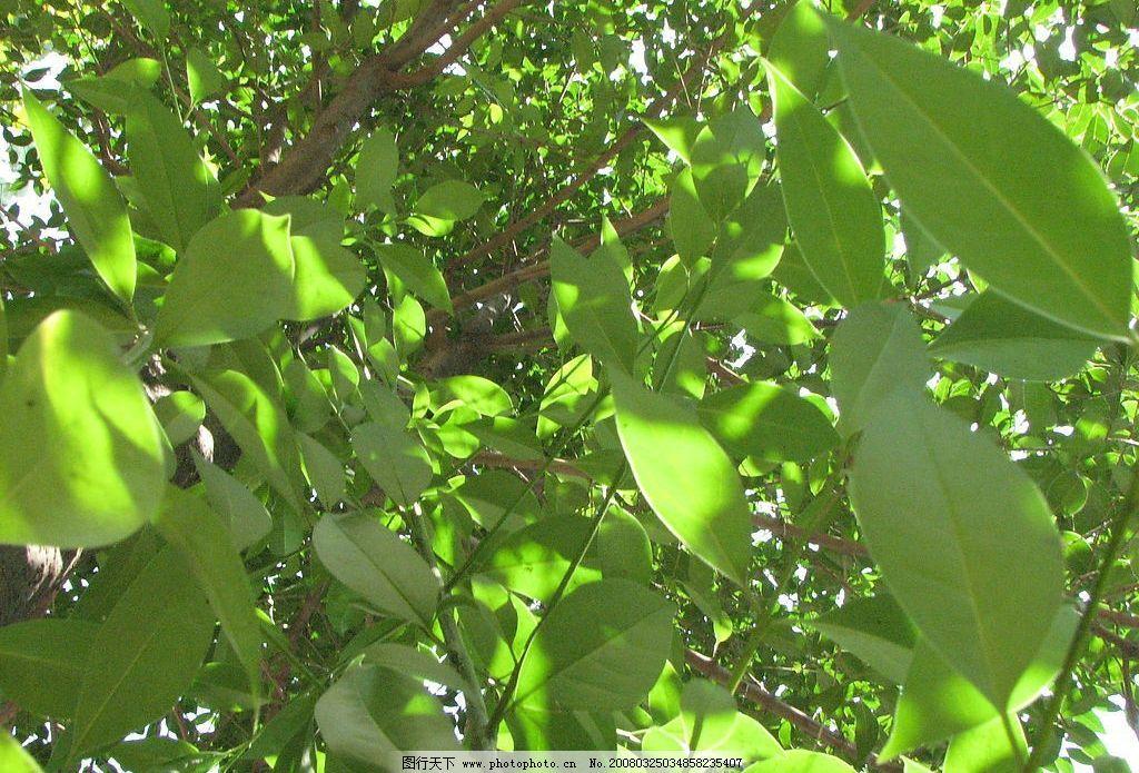 绿韵 花朵 树木 自然景观 自然风景 设计素材 摄影图库 180 jpg