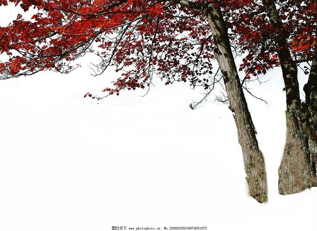 近景树 高清晰的近景树 自然景观 自然风景 摄影图库 72 jpg