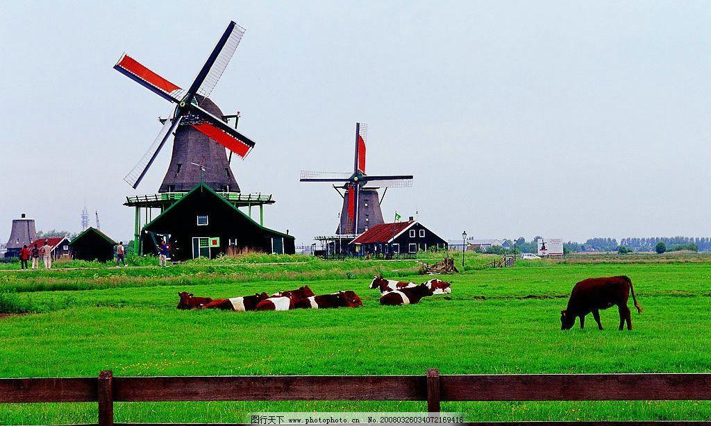 异域 旅游 人文 景观 牧场 草地 风车 奶牛 蓝天 白云 旅游摄影 国外