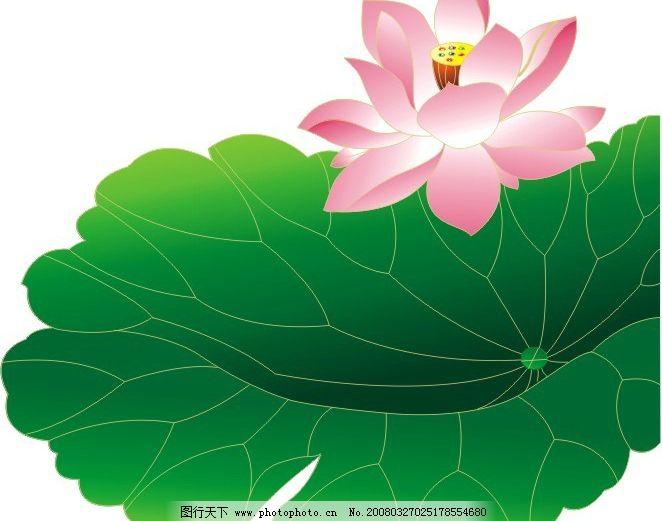 荷花 莲花 矢量花纹 花边 彩色纹样 底纹边框 花纹花边 生物世界 花草