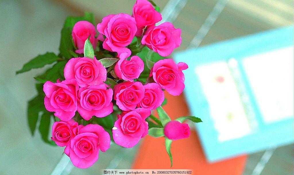 玫瑰花 情人礼物 浪漫 美丽 清晰 其他 图片素材 摄影图库