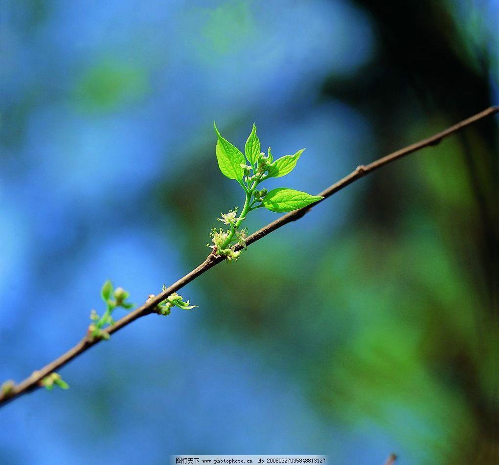 春天的嫩芽图片