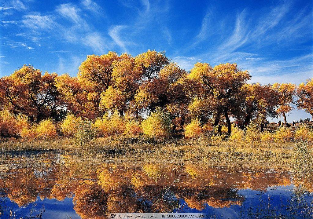 胡杨林 塔克拉玛干 自然景观 自然风景 摄影图库 300 jpg
