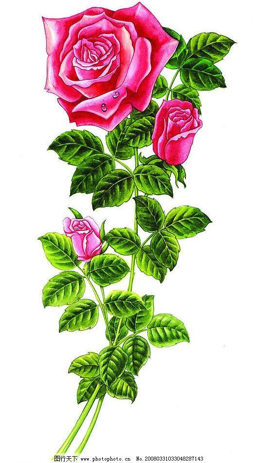 手绘红牡丹图片