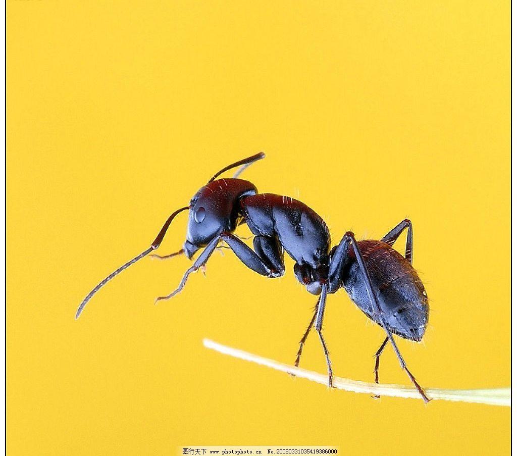 蚂蚁房子手工制作