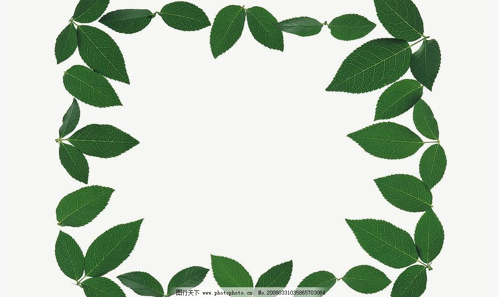 叶子边框 自然 植物 碧绿 叶子 边框 趣味 生物世界 树木树叶 自然