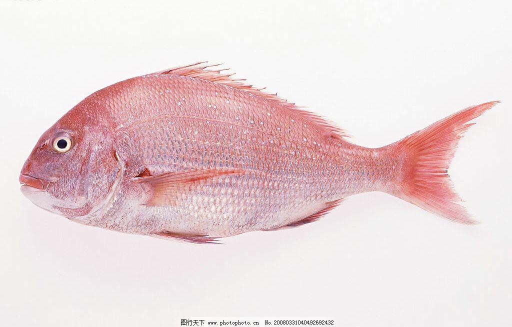 壁纸 动物 鱼 鱼类 1024_654